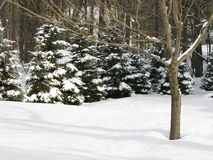 Scena pacifica della neve Fotografie Stock Libere da Diritti