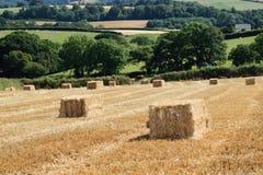 Scena pastorale Fotografie Stock