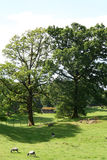 Scena pastorale di Cumbrian Immagini Stock