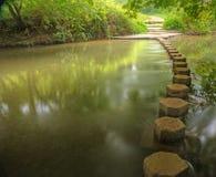 scena piękny zaczarowany lasowy strumień Fotografia Stock