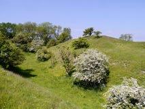Scena piacevole della collina e degli alberi Fotografia Stock Libera da Diritti