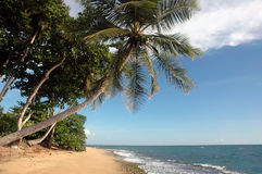 scena plażowa Zdjęcia Royalty Free
