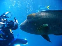 scena podwodna Zdjęcia Stock