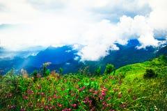 Scena porpora dei fiori selvaggi sull'alta montagna, fondo della natura Fotografie Stock