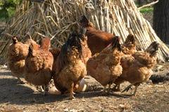 Scena rurale 1 Immagini Stock Libere da Diritti