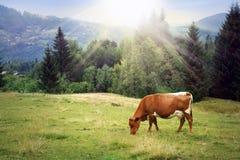 Scena rurale fotografia stock libera da diritti