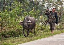 Scena rurale che caratterizza agricoltore e bufalo che camminano lungo la strada. Fotografia Stock