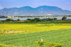 Scena rurale con gli agricoltori che lavorano ai giacimenti verdi dell'anguria immagini stock libere da diritti