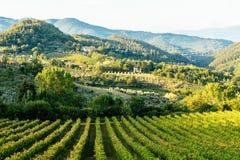 Scena rurale con la vigna e le colline immagine stock libera da diritti