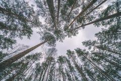 scena rurale di inverno con i rami di albero e della neve che raggiungono per Immagini Stock Libere da Diritti
