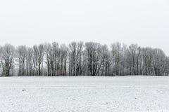 Scena rurale di inverno con nebbia ed i campi bianchi Fotografia Stock Libera da Diritti