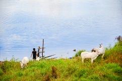 Scena rurale e campagna vicino a Battambang, Cambogia Fotografie Stock Libere da Diritti
