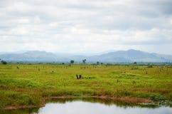 Scena rurale e campagna vicino a Battambang, Cambogia Immagini Stock
