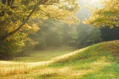Scena rurale nebbiosa Fotografia Stock