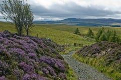 Scena scozzese Fotografia Stock Libera da Diritti
