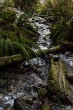Scena serena della foresta nel lago Buntzen fotografia stock libera da diritti