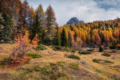 Scena soleggiata di mattina in parco nazionale Tre Cime di Lavaredo Paesaggio variopinto di autunno nelle alpi della dolomia, Tir Immagini Stock