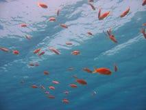 Scena subacquea Immagini Stock Libere da Diritti