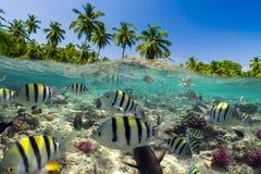Scena subacquea con la scogliera ed il pesce tropicale fotografia stock libera da diritti
