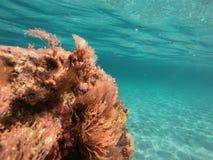 scena subacquea del mare blu con colore del turchese Fotografie Stock