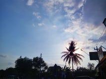 Scena tropicale Immagini Stock