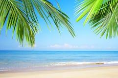Scena tropicale fotografie stock