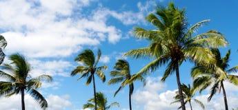 Scena tropicale con le palme immagini stock libere da diritti