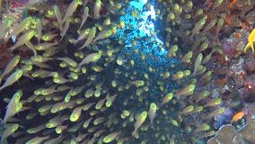 Scena tropicale della barriera corallina con i banchi del pesce cristallo in caverna archivi video