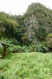 Scena tropicale intorno alla valle di Vinales Fotografie Stock
