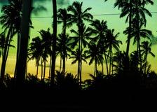 Scena tropicale Portho Gallinhas Brasile di tramonto Fotografia Stock Libera da Diritti