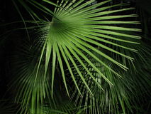 scena tropikalna obrazy stock