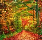 Scena variopinta della foresta in autunno fotografia stock
