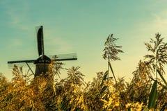 Scena variopinta di autunno nei canali famosi di Kinderdijk con i mulini a vento Metta a fuoco su erba nella priorità alta, nei p Immagini Stock Libere da Diritti