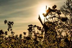 Scena variopinta di autunno nei canali famosi di Kinderdijk con i mulini a vento Metta a fuoco su erba nella priorità alta, nei p Immagine Stock Libera da Diritti