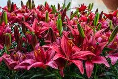 Giardini di fiore Fotografie Stock Libere da Diritti