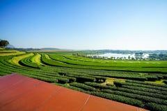 Scena w herbacianej plantaci, natury scena Fotografia Royalty Free