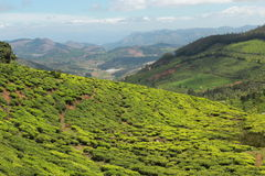 Scena widoku herbaty pola Obrazy Royalty Free