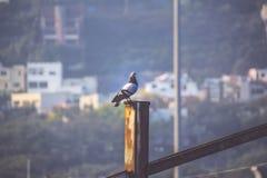 Scenario urbano tuffato Fotografia Stock Libera da Diritti