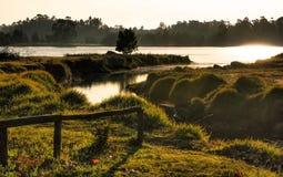Scenary blisko rzeki w obszarze wiejskim zdjęcie royalty free