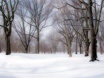 Scence d'hiver photo libre de droits