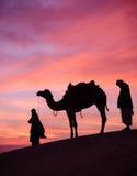 Scence del desierto con el camello y el cielo dramático Fotos de archivo libres de regalías