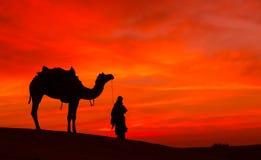 Scence del desierto con el camello y el cielo dramático Fotografía de archivo libre de regalías