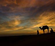Scence del desierto con el camello y el cielo dramático Imágenes de archivo libres de regalías