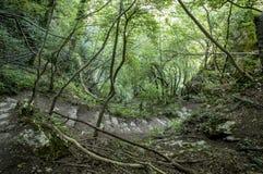 Scendendo la giungla Immagine Stock