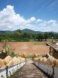 Scendendo le scale del Naga dal tempio Fotografia Stock Libera da Diritti