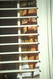 Scene with actress looking through blinds Stock Photo