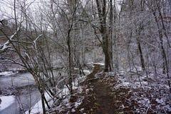 Scene all'insenatura la contea di Allegan Michigan del cigno Fotografie Stock