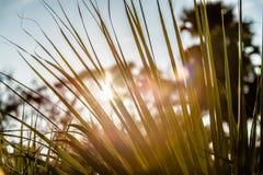 Scene alla piantagione della baia di botanica vicino a Charleston Carolina del Sud fotografia stock libera da diritti