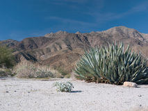 Scene in the Anza-Borrego Desert Royalty Free Stock Photos