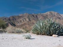 Scene in the Anza-Borrego Desert. The Anza-Borrego Desert in Southern California royalty free stock photos